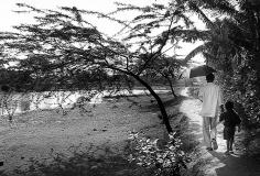 Sundarban_21